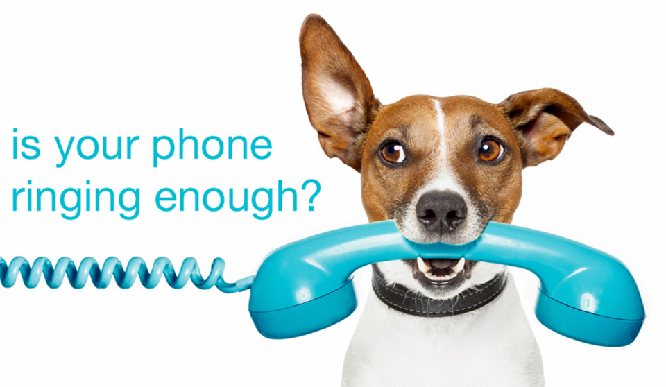Dog With Telephone